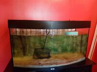 juwel vision 180 bow front fish tank for sale