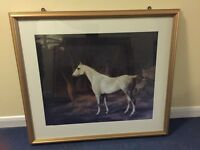 Amazing Horse photo in frame with glass