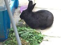 3,5 months old boy rabbit