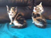 Cute and playful kittens