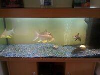 Juwel fish tank 240l (4ft) good condition light oak