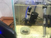 15 baby guppies for sale