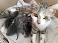 4 gorgeous kittens, born 5th June, ready the beginning of August.