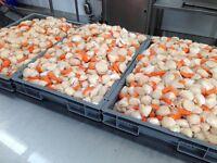 Shellfish & Fish Production