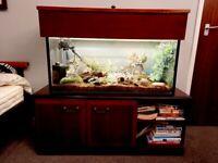 QUICK SALE!! 160litre Aquarium & Stand & Lid+ LOTS of extras