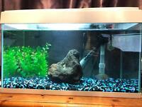 54 Litre tropical fish tank/aquarium