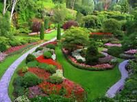 R.F Garden & Outside Maintenance Tidyups Tree's Hedges Gardens rotavated driveways cleaned