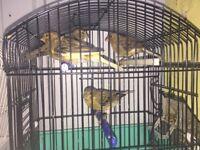 Canary X4