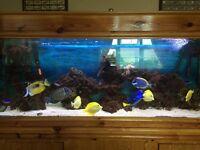 5ft marine aquarium
