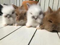 Beautiful fluffy rabbits