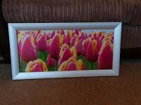 Tulip photo print in silver frame