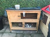 2 Baby doe lop eared rabbits & hutch.