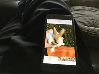 Baby rabbits for sale male and females ready now 8 week old from £10each to £35each ask for info