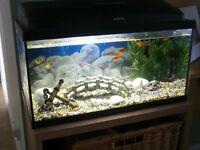 Aquqel Tropical Fish Tank, 600mm x 300mm x 300mm