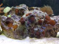 Marine tank and corals