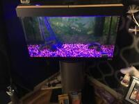Tropical fish tank with stand + extras