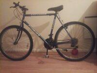 bike probike