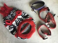 COLLECTION OF DOG ACCESSORIES INCLUDING COLLARS AND JACKET