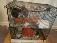 3 male rats.