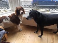 Dog walker / buddy needed in West End of Glasgow