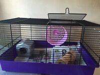 Mice and cage