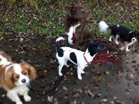 Local, Affordable Dog Walking/ Pet sitting Service