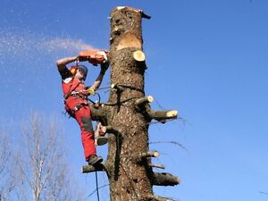 SYDNEY TREE SERVICE Waverley Eastern Suburbs Preview