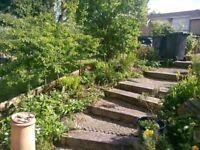 South East London Garden Maintenance Contractors - Catford based
