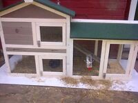 Large hutch and Two rabbits