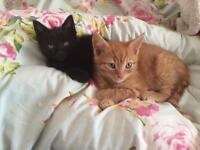Esme & Milo 🐱