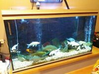 Fish Tank Only Rena 4ft x 2ft x 2ft