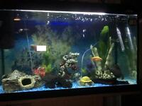 Tropical fish tank full set up 110L