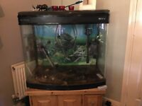 Curved Front Fish Tank