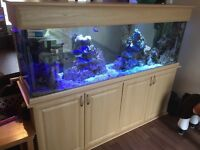 Marine aquarium full set up with fish