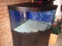 Juwel Tringo 350L Bowfront Aquarium Full Setup For Sale £179