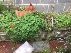 Garden bricks and soil/compost