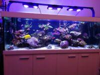 6x2x2 White Eheim Scubaline 640litre Aquarium Tank and Cabinet