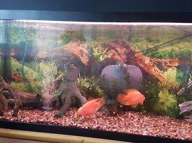 Fish tank aquarium with equipment 100 × 29 × 45 cm