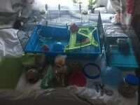 Large Syrian Hamster cage with accessories and food