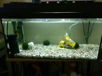 Fush tank without fish