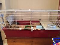 3 guinea pigs and cage