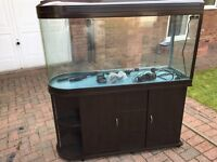 300l Fish tank including pump and heater
