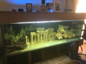 6ft fish tank with filter and ornaments for sale