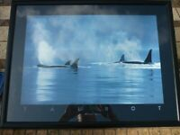 """Vintage (1990) Athena® Black Framed Colour Poster Print Picture - """"Orcinus Orcas"""" by Bob Talbot"""