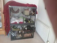 (Free) 3 rats and a large £200 cage.