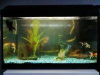 80L fish tank plus 8 fish