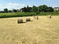 2016 Round Bale Hay For Sale