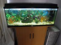 jewel fish tank and fish