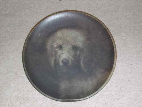 RARE ANTIQUE BEDLINGTON TERRIER DOG OIL PAINTING 1905