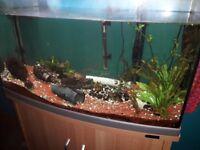 160 lt aquarium. (Aqua Marine 900 by Aqua One).. Offers